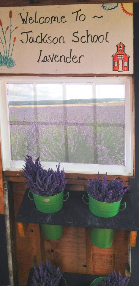 Window and Lavender