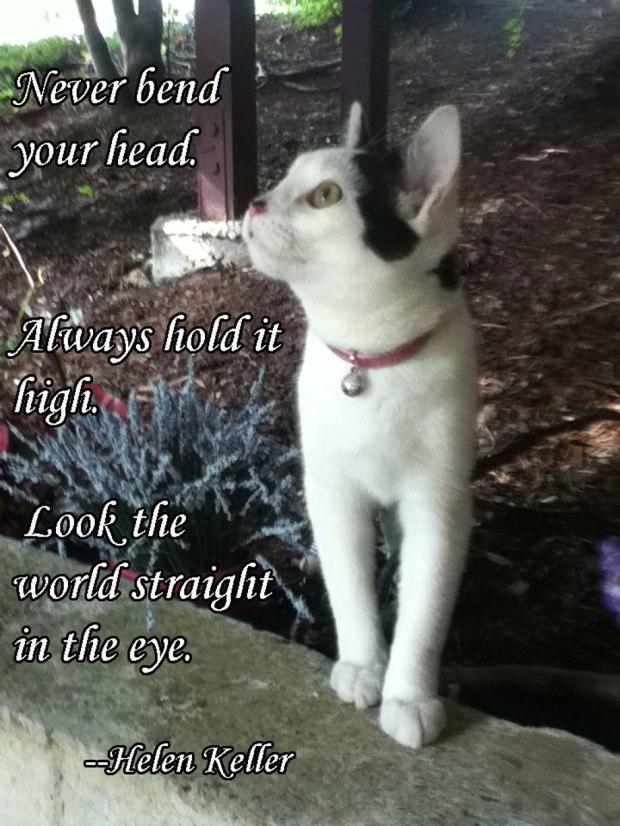 Cat looking up  Helen Keller quote