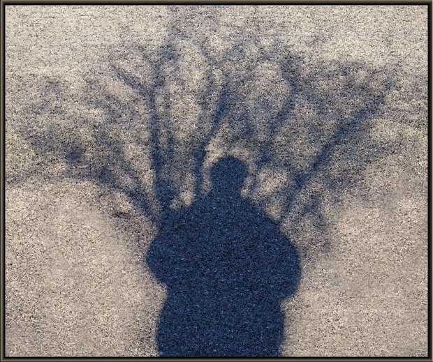 Shadows--tree and person
